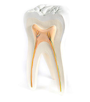 root canal advanced cabos dentistry